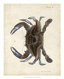 Vintage Crab II
