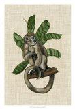 Canopy Monkey I