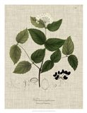 Linen & Leaves I