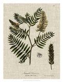 Linen & Leaves III