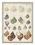 Seashell Synopsis I