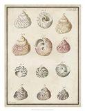 Seashell Synopsis II