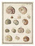 Seashell Synopsis III