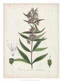 Flowering Flora IV