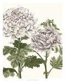 Early Spring Chrysanthemums III