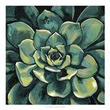 Succulent Bloom I