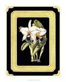 Orchids on Black I