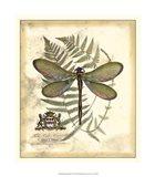 Regal Dragonfly II