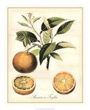 Tuscan Fruits III