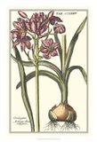 Botanical Beauty I