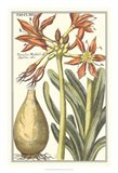 Botanical Beauty III