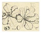 Vintage Leaf Study I