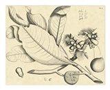 Vintage Leaf Study II