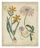 Botanical Repertoire I
