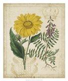 Botanical Repertoire III