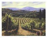Tuscany Vines