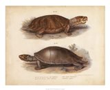 Antique Turtle Pair II
