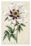 Imperial Floral II