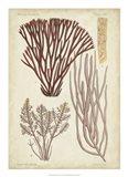 Seaweed Specimen in Coral I