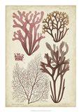 Seaweed Specimen in Coral II
