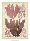 Seaweed Specimen in Coral IV
