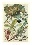 Fruits & Foliage V