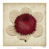 Pop Floral IV