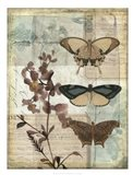 Music Box Butterflies II