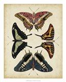 Display of Butterflies II