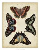 Display of Butterflies IV