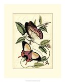 Petite Butterflies I
