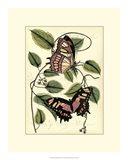 Petite Butterflies IV