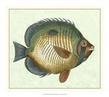 Butterfly Fish I