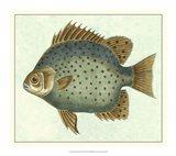Butterfly Fish II