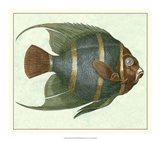Angel Fish I