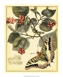 Whimsical Butterflies I