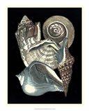 Seashell Anthology I