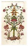Botanical Hybrid I