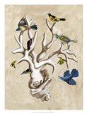 The Ornithologist's Dream II