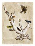 The Ornithologist's Dream III