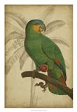 Parrot and Palm I