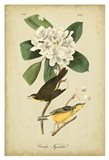 Audubon Canada Flycatcher - your walls, your style!