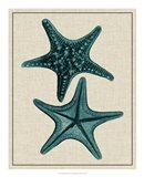 Coastal Starfish II