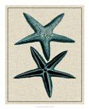 Coastal Starfish III