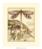 Whimsical Dragonflies I