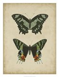 Antique Butterfly Pair II