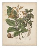 Botanicals VI