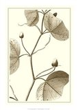 Cropped Sepia Botanical IV