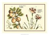 Garden Botanica II