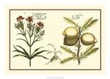 Garden Botanica IV